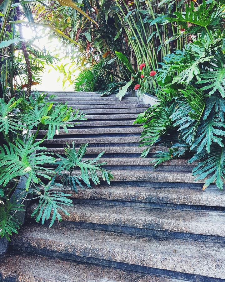 Лестница в природе стоковое изображение