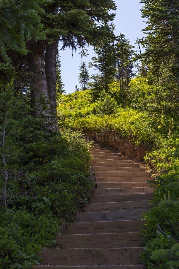 Лестница в следе глуши стоковое изображение rf