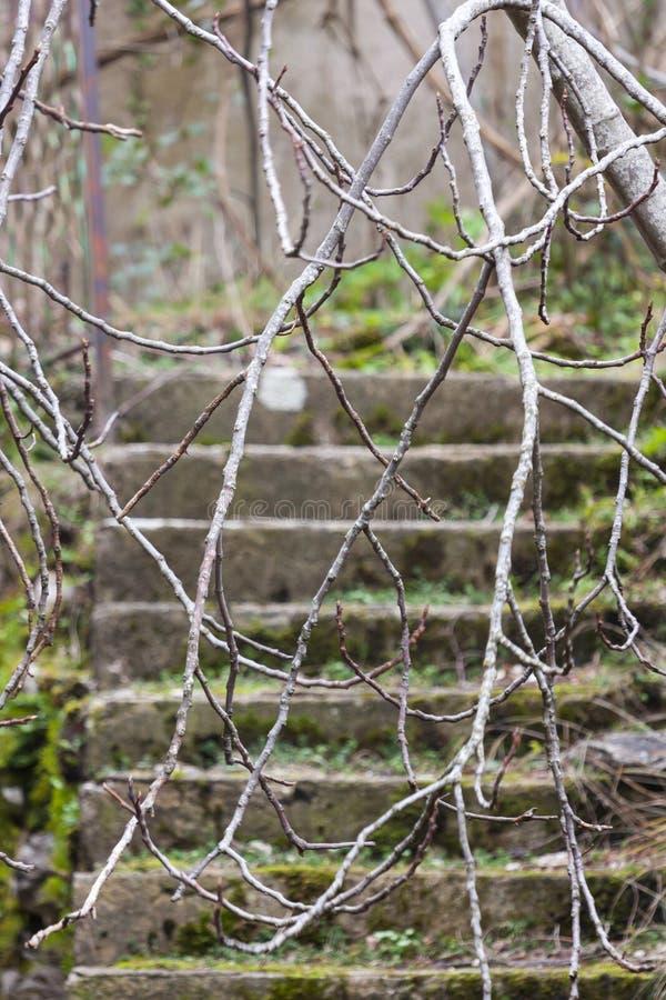 Лестница лестницы мха старая влажная влажная каменная в виске леса стоковые фотографии rf