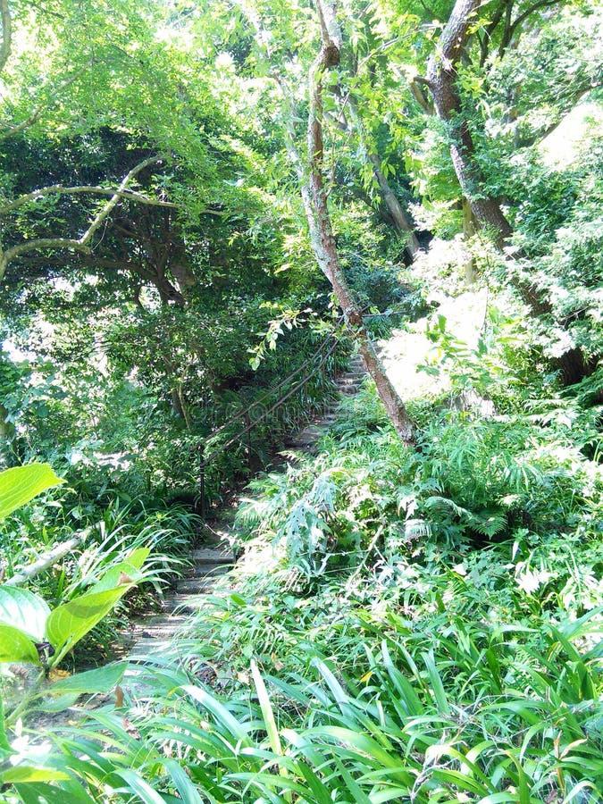 Лестницы виска стоковое фото