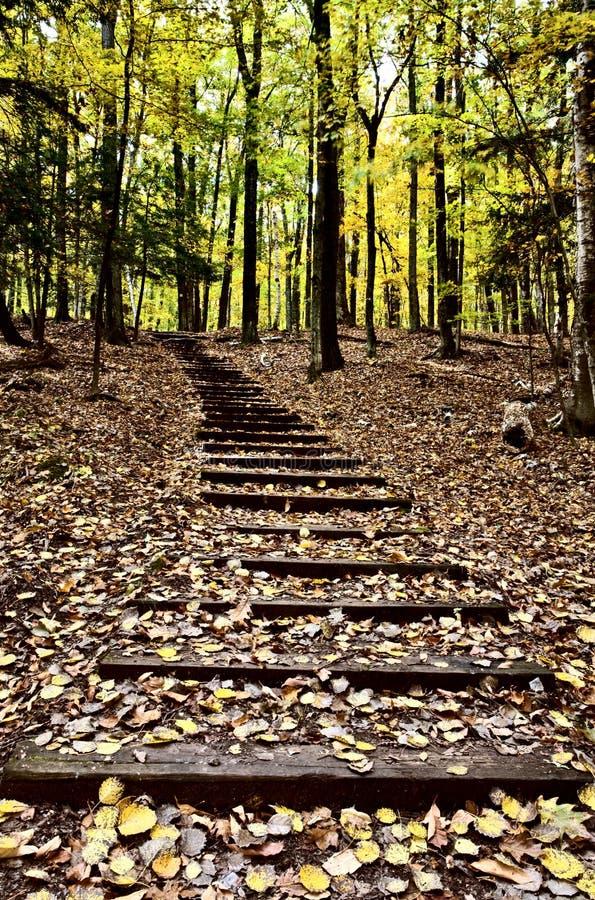 лестницы деревянные стоковое изображение rf