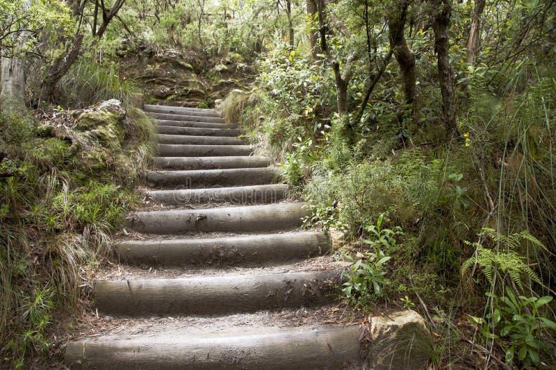 лестницы деревянные стоковое фото rf