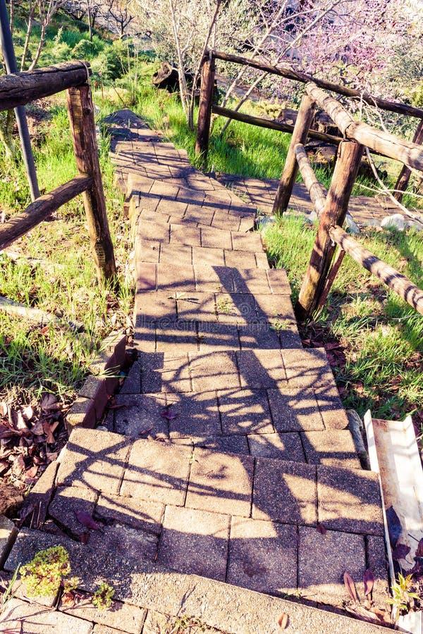 Лестницы к природе стоковая фотография