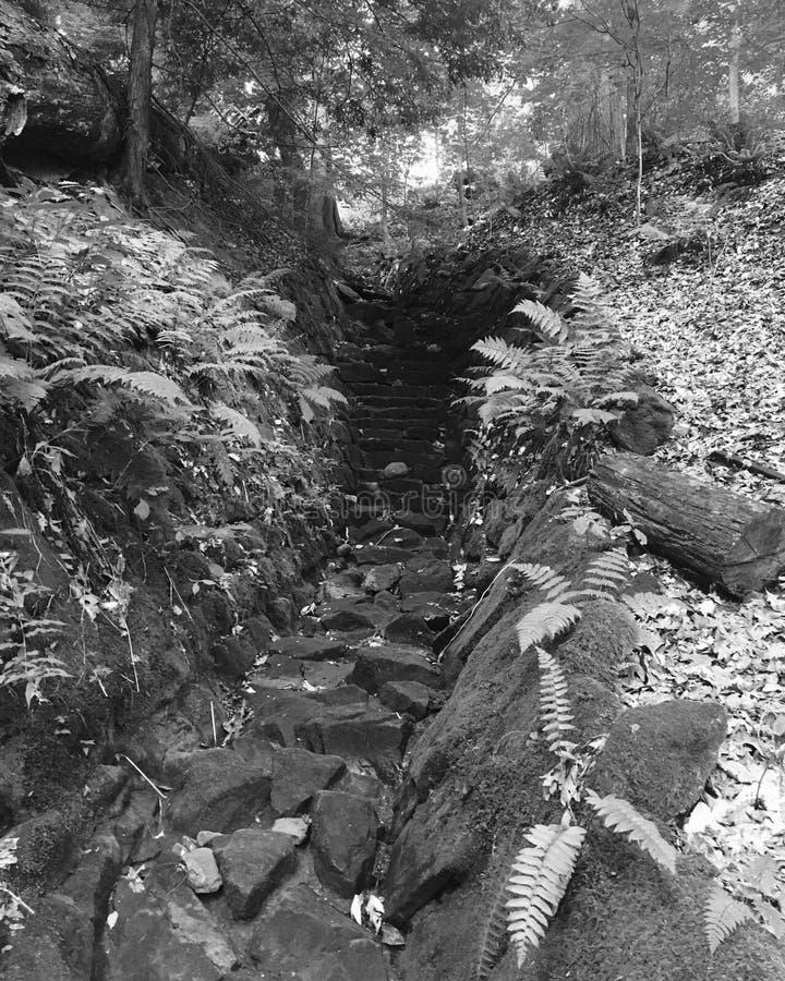Лестницы природ стоковое фото rf