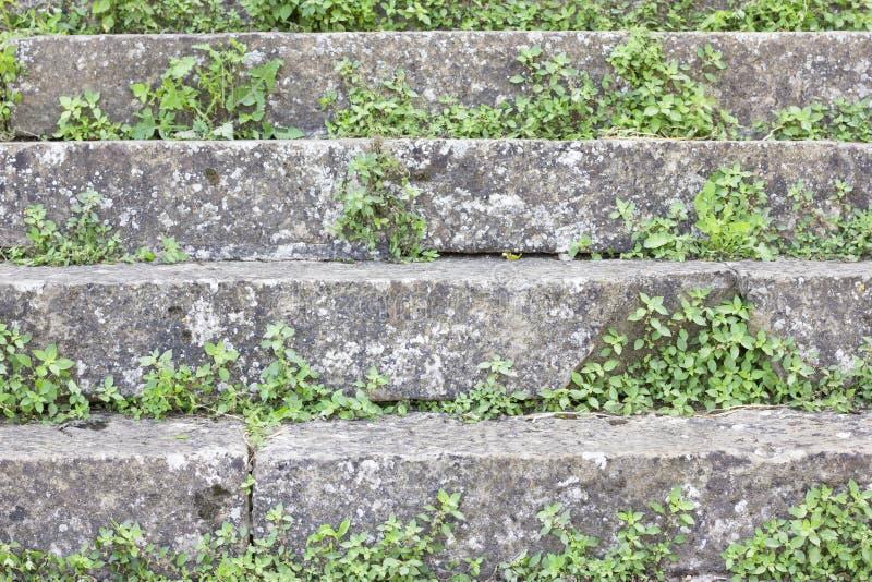 Лестницы с вегетацией стоковое фото