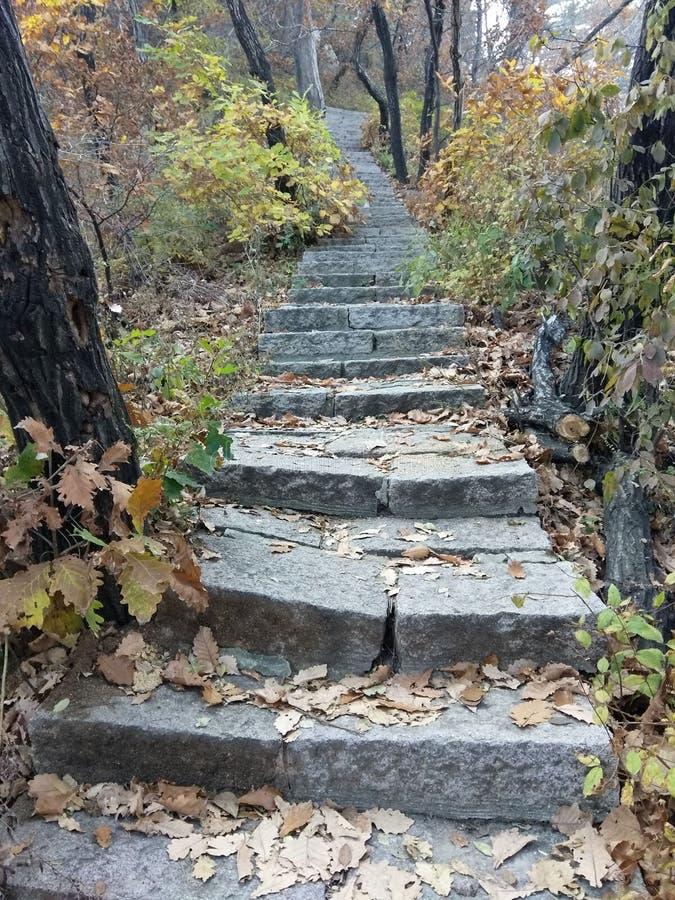 Лестницы стоковое изображение