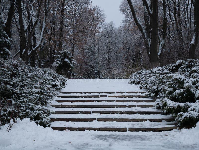 Лестницы Snowy на парке зимы на сумерках захода солнца стоковое фото rf