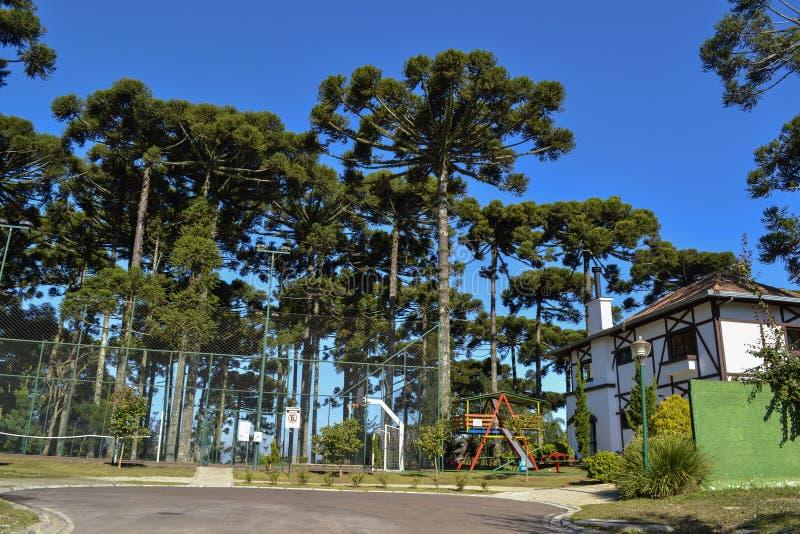 Лес араукарии стоковое изображение