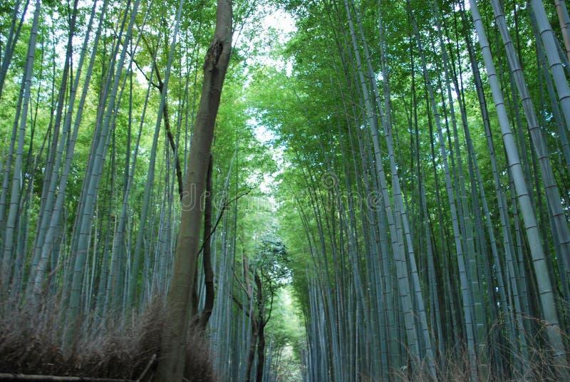 Лес бамбуков в Киото, Японии стоковое изображение rf
