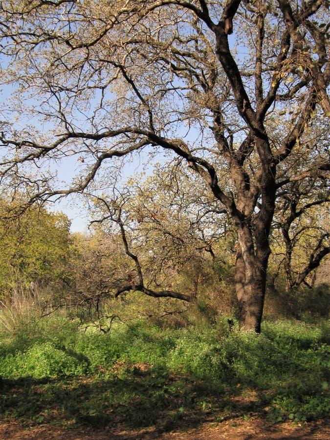 Лес березы на солнечный день стоковое изображение rf