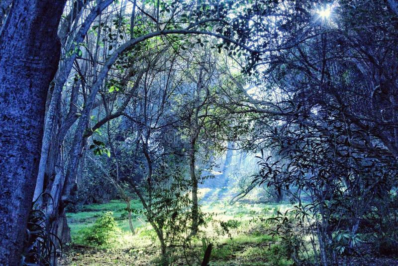 Лес блю стоковое изображение