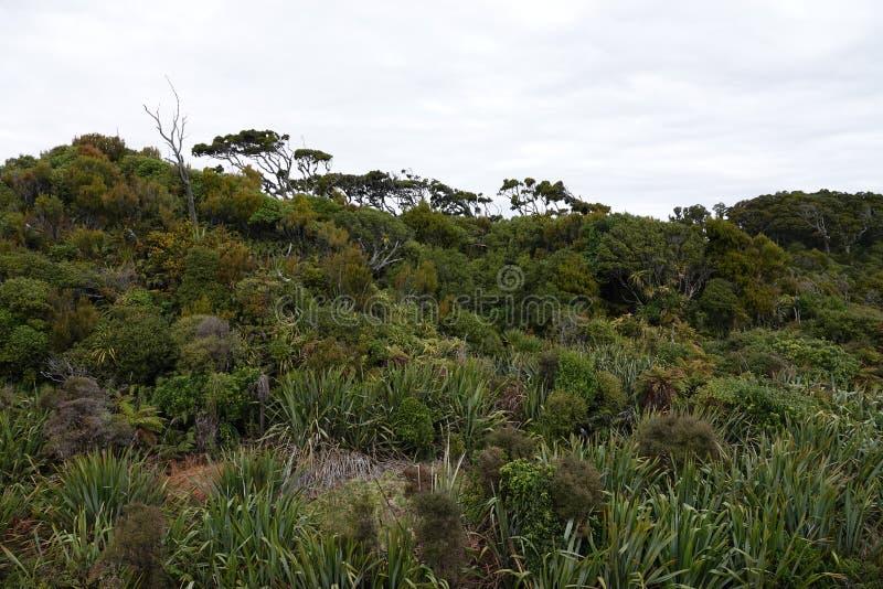 Лес болота Kahikatea на пляже заводи корабля на западном побережье Новой Зеландии стоковые изображения