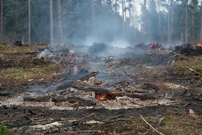 Лес был отрезан вниз и сгорен стоковое фото rf