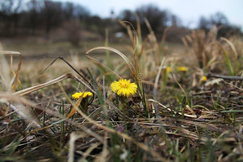 Лес весны бореальный стоковое фото rf