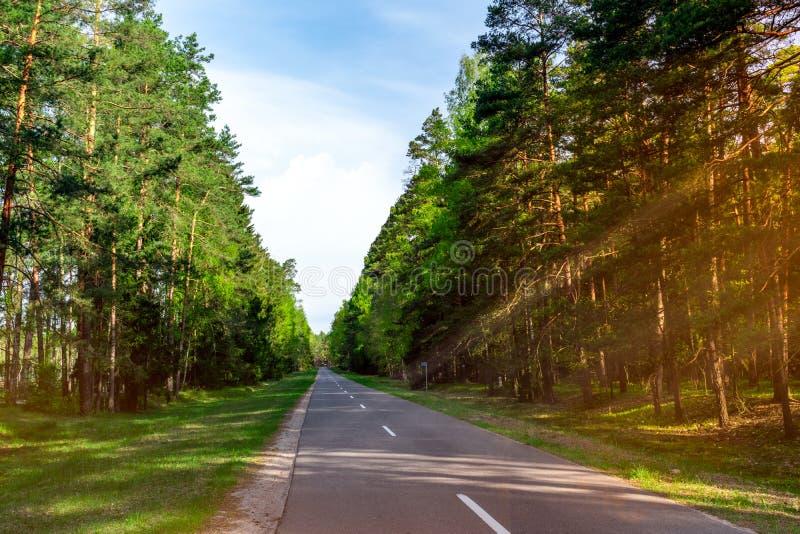 Лес весны глубокий в прослеженном луче дневного света через дерево Дорога пути в древесине стоковое фото rf