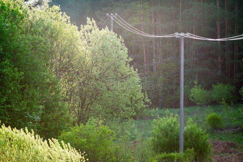 Лес весны и сельский ландшафт стоковое фото rf