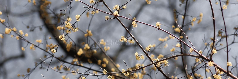 Лес весны стоковое изображение