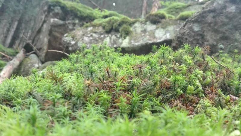 Лес в близком взгляде стоковые изображения rf