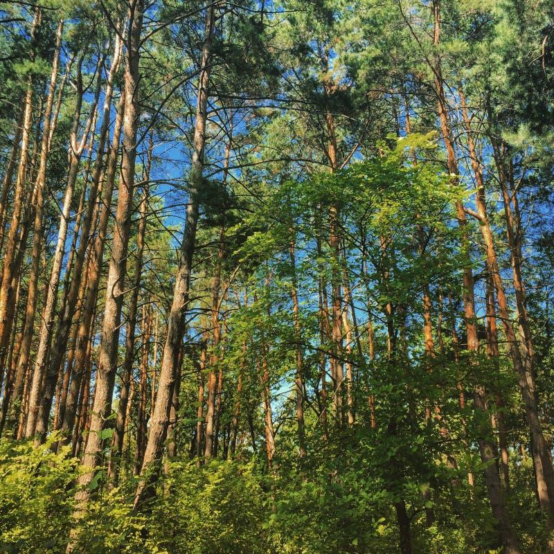 Лес в Киеве стоковые фотографии rf