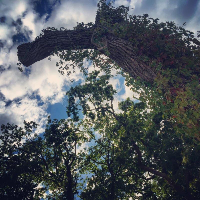Лес в Киеве стоковое изображение rf