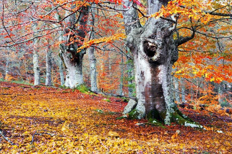 Download Лес в осени с яркими цветами Стоковое Изображение - изображение насчитывающей ноябрь, цвет: 37929959