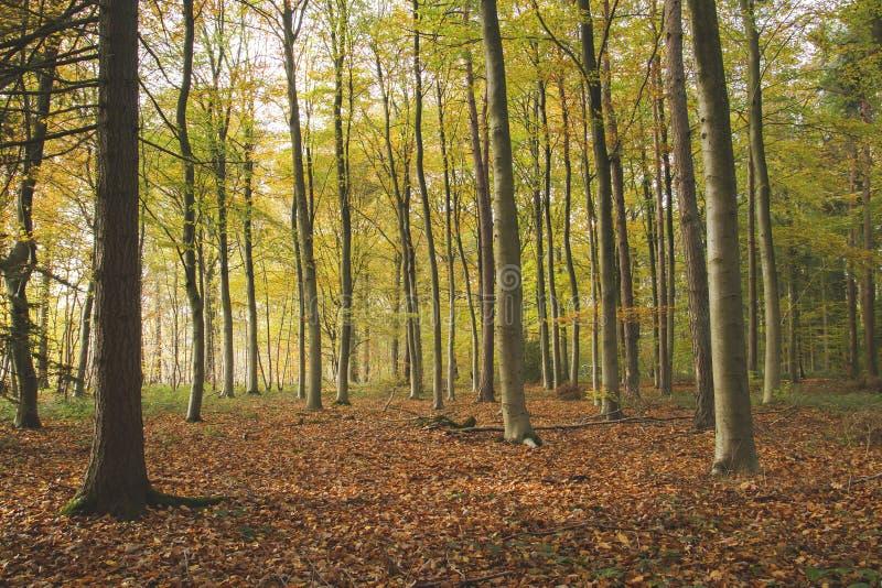 Лес в осени стоковая фотография rf