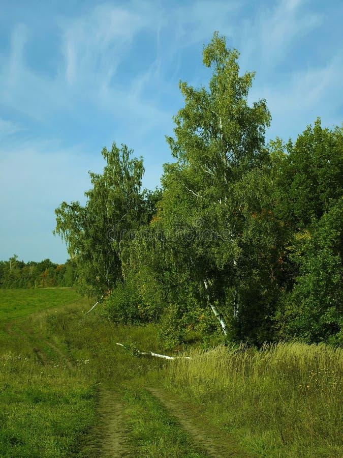 Лес вдоль дороги в лете стоковое изображение rf