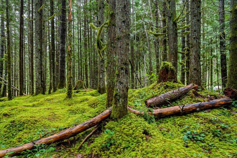 Лес в парке серебряного озера захолустном, Британской Колумбии, может стоковые фотографии rf