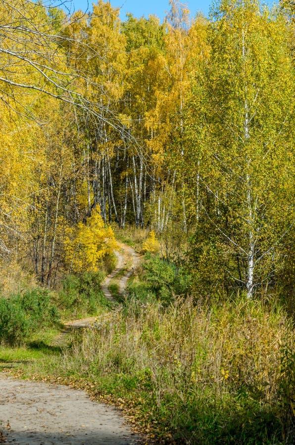 Download Лес в падении стоковое фото. изображение насчитывающей померанцово - 81808472