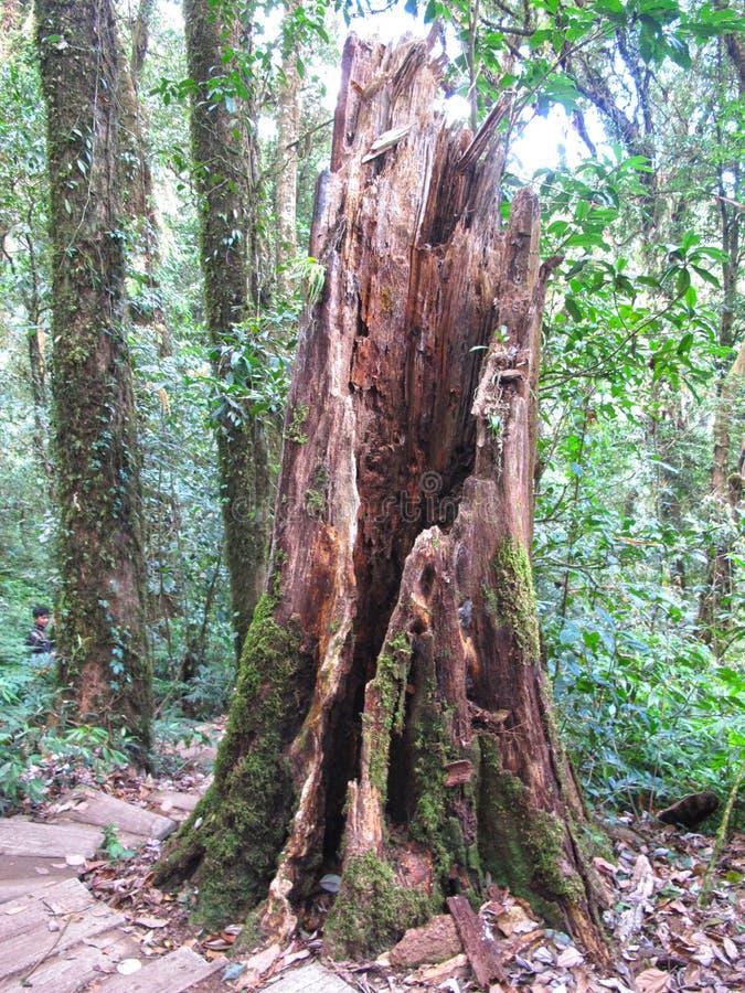 Лес в Таиланде для путешествовать стоковые изображения rf
