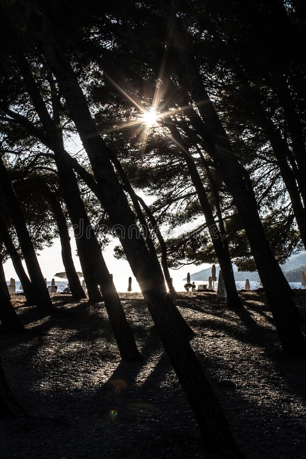Лес в тени на красивом солнечном пляже стоковое фото rf