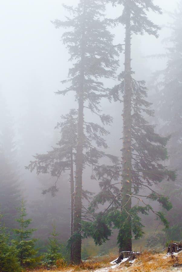 Download Лес в тумане на последнее Fal Стоковое Фото - изображение насчитывающей древесины, вал: 33737364