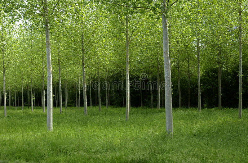 Лес в Франции стоковое фото rf