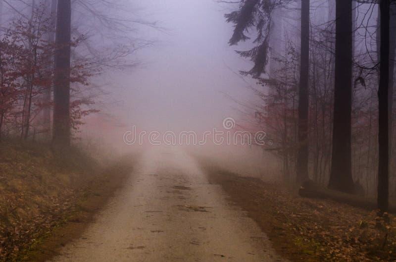 Лес в чехе Rebublic, стоковое фото