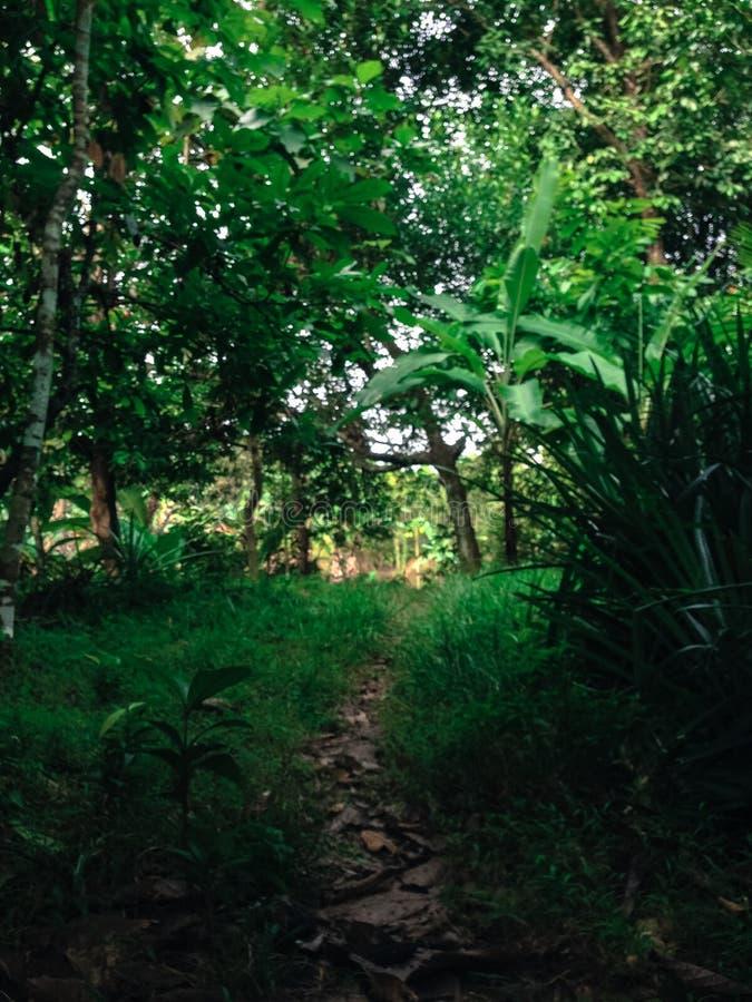 Лес в южных celebes стоковое фото