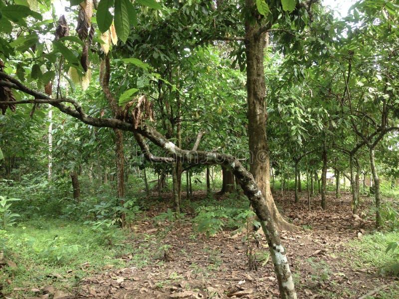 Лес в южных celebes стоковая фотография rf
