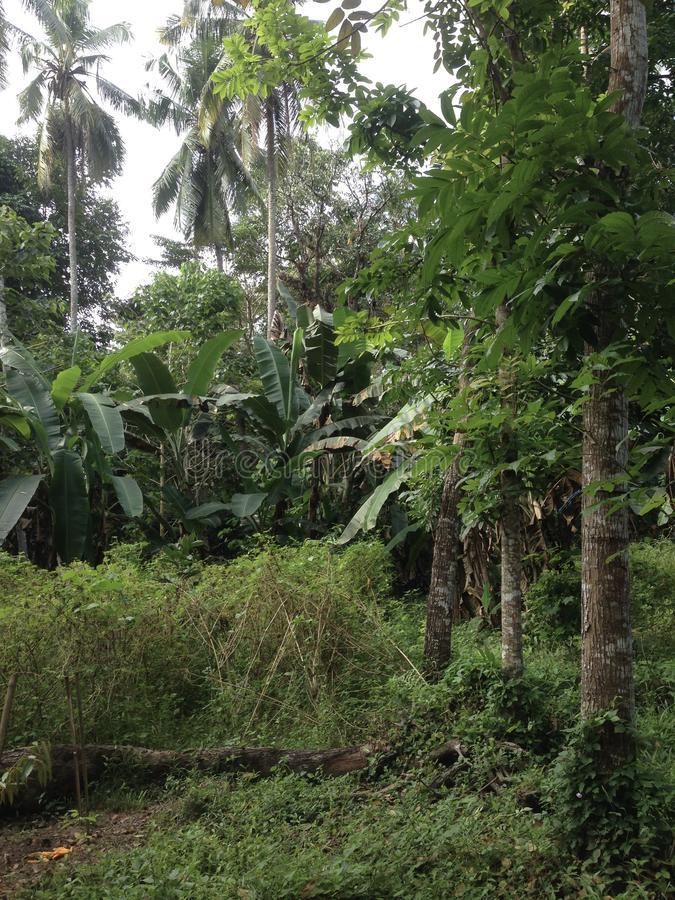 Лес в южных celebes стоковое изображение rf