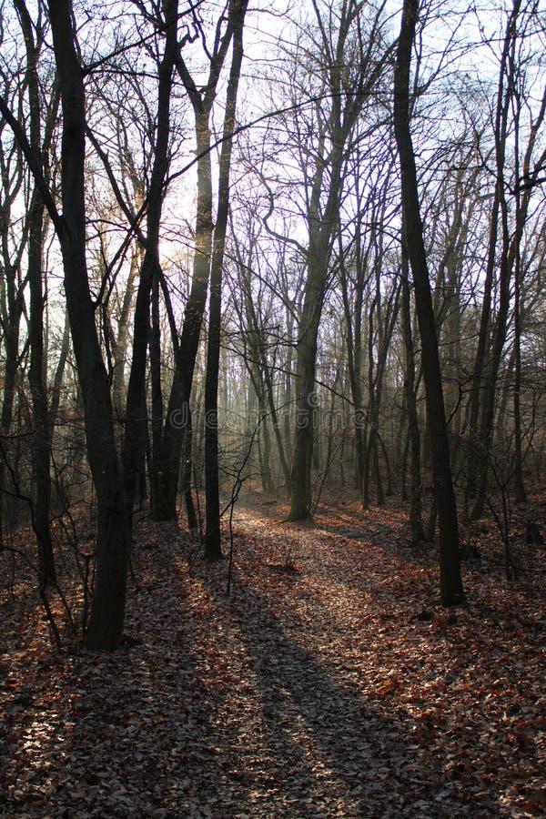 Лес в wintertime стоковое изображение