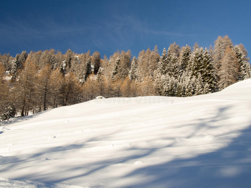 Download Лес горы в солнце стоковое фото. изображение насчитывающей массив - 40586494