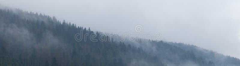 Лес горы в тумане, атмосфере древесин Предпосылка природы красивой обстановки дикая стоковые фотографии rf