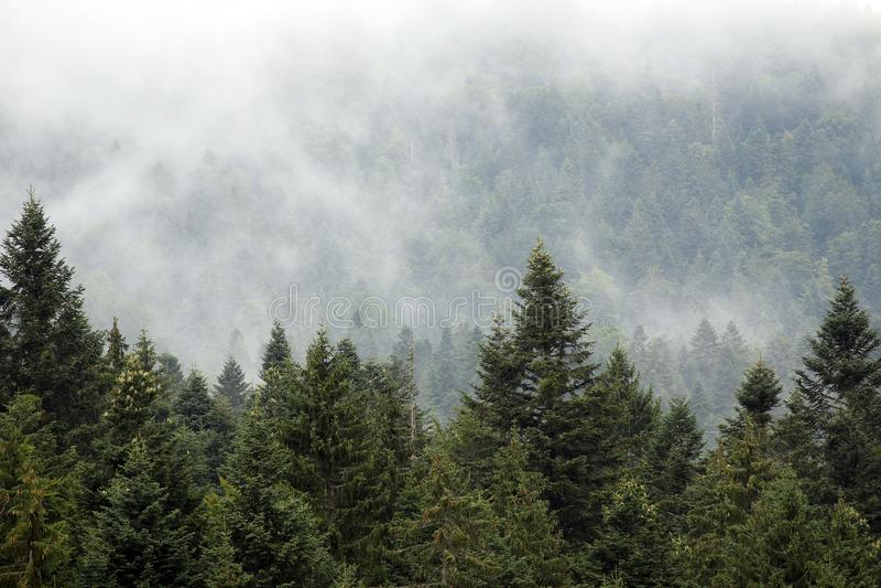Лес горы в тумане стоковое фото rf