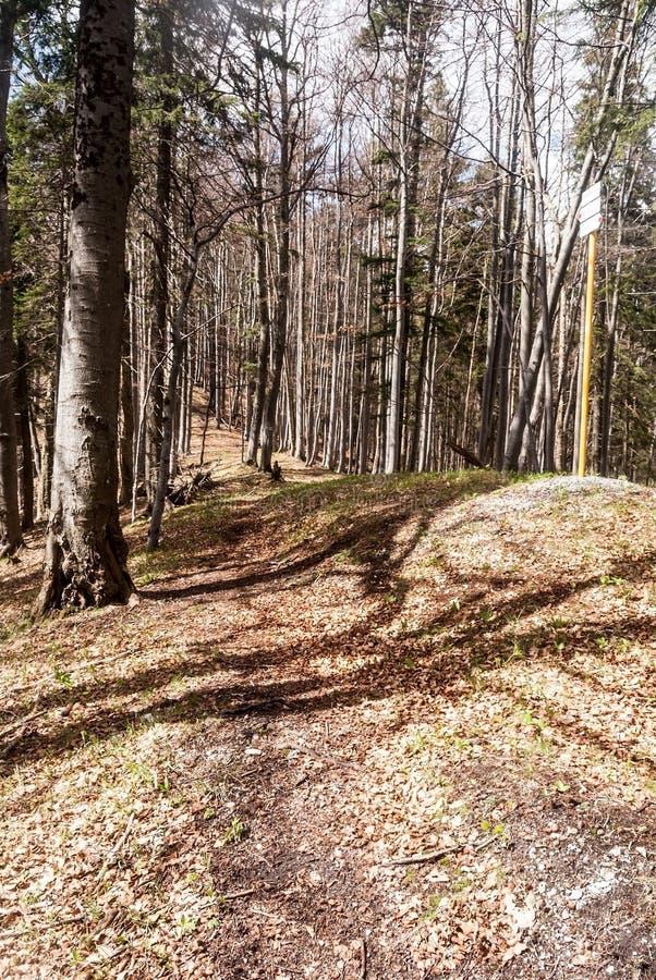 Лес горы тропы весной с guidepost в Словакии стоковая фотография rf
