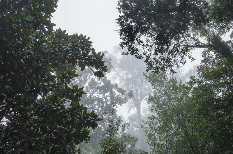 Лес глубокого юга туманный стоковые изображения rf