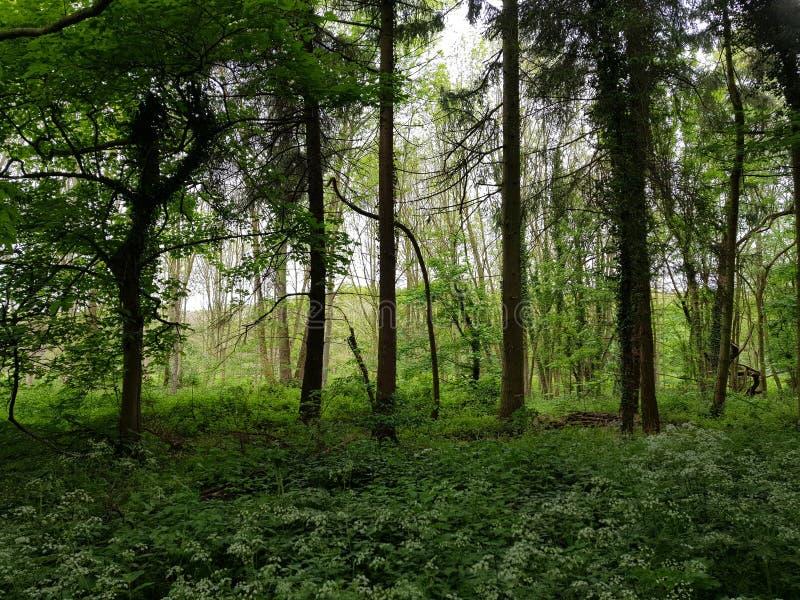 Лес Дербишир Kedleston стоковое фото rf