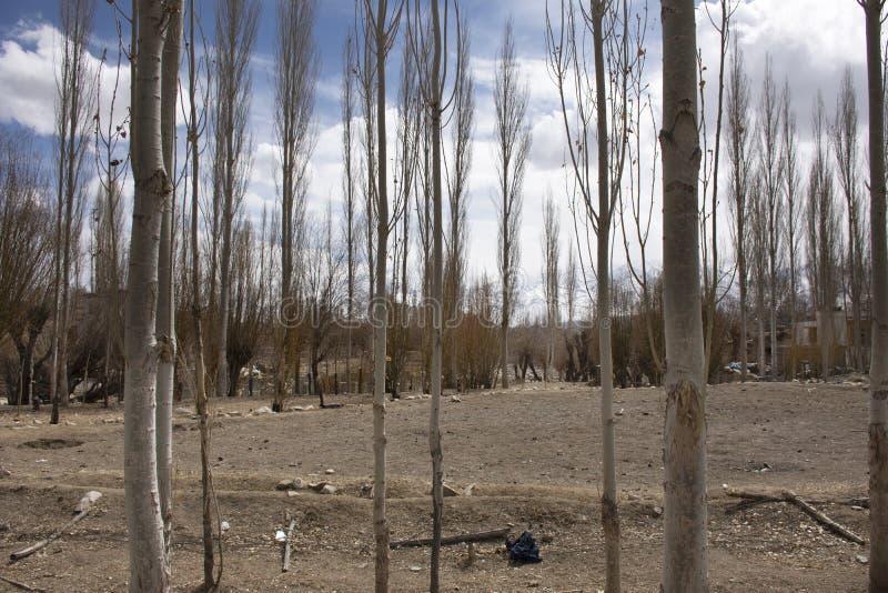Лес деревьев тополя и ландшафт деревни Leh Ladakh на гималайской долине пока сезон зимы в Джамму и Кашмир, Индии стоковая фотография