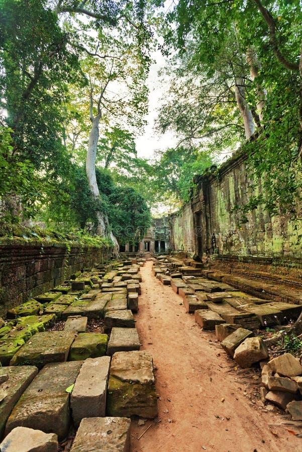 Лес джунглей на области Angkor Wat стоковые изображения