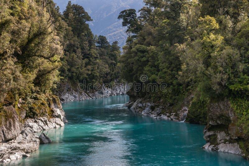 Лес дерева бука вокруг ущелья Hokitika в Новой Зеландии стоковые изображения