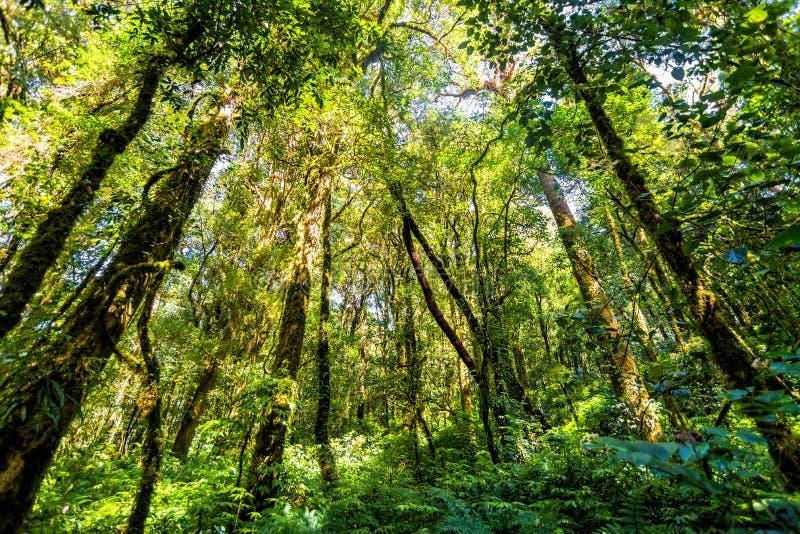 Лес дерева в сезоне осени Таиланда стоковая фотография rf