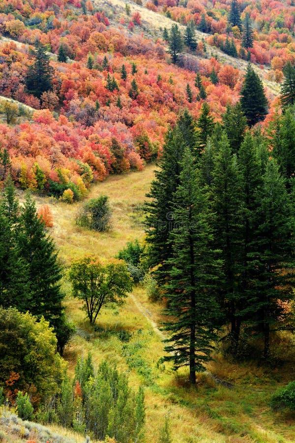 Лес деревьев падения осени стоковые фотографии rf