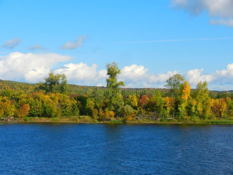 Лес лета на речном береге стоковое фото rf